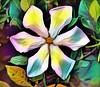Digital Jasmine (AngelVibeDigital) Tags: jasmine digitaljasmine colorful nikon digitalart nikonp900 paintedflowers photography art blossom