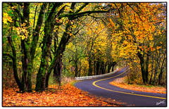Gorge - II (msankar4) Tags: road autumn fall yellow oregon october highway dynamic or scenic vivid hike symmetry falls historic foliage trail columbiariver waterfalls ravine balance treebranch columbiarivergorge route30 historiccolumbiariverhighway rainforests temperaterainforest dynamicimage nationalscenicarea nationalforestservice usroute30 scenicarea me2youphotographylevel2 me2youphotographylevel1