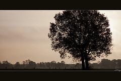 Riders in a perspective view (aNNaj) Tags: morning people tree bike silhouette sunrise perspective boom biker ochtend fiets mensen fietser perspectief zonsopkomst bigworld grotewereld hetlijktmaarzo itseemsthatway