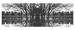 (stardust) Tags: trees blackandwhite blancoynegro water agua triangle arboles flood inundacion triangulo
