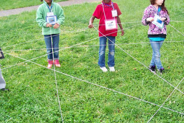 Wetland Web