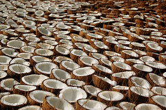 A sea of coconuts (gornabanja) Tags: brown india white nikon pattern d70 many kerala agriculture coconuts backwaters drying mygearandme blinkagain lpopen rememberthatmomentlevel1