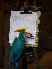 Parrot Painting (wwarby) Tags: show trip vacation holiday slr bird animal grancanaria painting outdoors island zoo spain funny wildlife parrot olympus event abroad digitalcamera e3 50200mm zuiko digitalslr captivity dayout palmitospark zuikodigital olympuse3