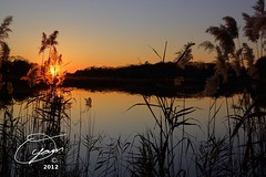 oyaMAM_20121117-172906s5 - Sun Peeks Thru the Reeds (MichaelAPMayo) Tags: nature photography riverhead oyamam oyamaleahcim