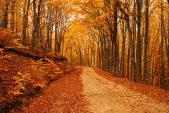 Autumn Road in the Forest (nikolaos p.) Tags: autumn trees fall landscape landscapes fallcolors greece roads forests halkidiki outdoord          holomon