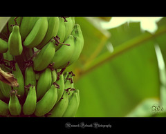 bananas (Animesh2000) Tags: light red india flower macro green art home nature floral beautiful leaves fruit night photography mono pattern artistic kerala photograph calicut animesh debnath