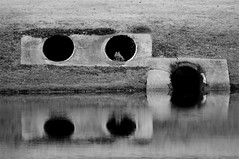 cat in a culvert (klondike kid) Tags: reflection water cat concrete pipe culvert