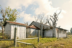 Rust in the Wind (Revisited II) (Robert_Keller) Tags: barn rural tampa rust florida decay