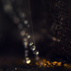 Spider pearls II (- David Olsson -) Tags: macro yellow closeup square droplets drops backyard nikon sweden bokeh small tripod spiderweb mini karlstad tiny dots tamron 90mm 90 squarecrop 2012 dx shortdof d5000 bokehdots davidolsson