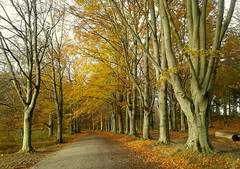 All Ekebyhovs park (Per Ola Wiberg ~ Powi) Tags: beautiful october hwa 2012 musictomyeyes naturegroup amazingnature simplybeautiful eker ekebyhovsparken eperke flickrestrellas peaceawards gnneniyisithebestofday afeastformyeyes grupodehablahispana brilliantphotography addictedtonature showthebest naturesribbon vangoghaward besteverdigitalphotography