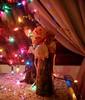 Sou tão retro (Santinha - Casas Possíveis) Tags: natal orchidaceae pinecone orquídeas cones pinhas revellion bouganville decoraçãodemesa orquídeassecas órkhis arranjosnatalinos decoraçãoanonovo