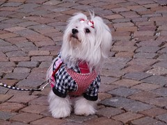 P1260099 (RRT:D*:D*) Tags: italy dog animal animals cane animali animale trentino brixen bressanone tirolo sudtirol sudtirolo rrtdd