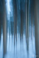 winterwald (Flavio Kolp) Tags: winter tree nature natur eis wald baum wischer