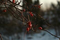Mirow i Bobolice (Kaarroo) Tags: winter snow castle zima zamek mirow snieg bobolice