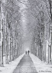 Cold winter ...Explore..! (Alex Verweij) Tags: park trees winter dog snow cold tree ice canon walking bomen couple december path wandelen sneeuw pad freezing hond boom 7d spoor 2012 almere ijs sporen lumierepark alexverweij mygearandme