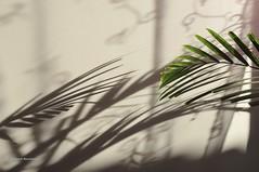 Graphisme (patoche21) Tags: shadow plant plante leaf nikon ombre feuille d300 graphisme graphism 18200mm capturenx2 patrickbouchenard