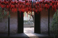 Image of Red (Purple Field) Tags: china street color film rollei analog 35mm temple se alley fuji 40mm 中国 35 provia 寺 散歩 ローライ f28 jiangsu 同里 tongli 100f 路地 sonnar カラー 富士 rollei35se rdpiii rdp3 銀塩 フィルム アナログ 江蘇省 canoscan8800f ゾナー プロビア stphotographia