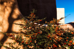 'Au Contraire' (Canadapt) Tags: flowers shadow sky usa plant newmexico santafe wall architecture bush berries canadapt