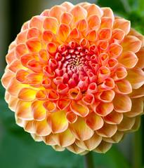 Ball of sun. (S.K.1963) Tags: elements dahlia flower orange macro dof bokeh canon 100mm 28 green