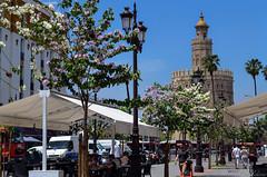 Calle Almirante Lobo (Biolchini) Tags: spain espanha sevilla seville sevilha street urban tower oro torre marcelobiolchini 2016