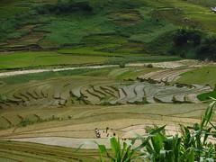 Rice paddies in Sapa valley (vbolinius) Tags: 2016 locals ricefields sapa travel vietnam