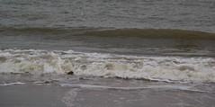 IMG_1072 (EadaoinFlynn) Tags: curracloe beach sea ireland irishsea wexford