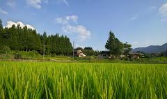 (tyodai) Tags:     sony 7 a7 ilce7 super wideheliar 15mm f45 aspherical iii japan   gifu    summer