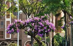 minha LINDA cidade (Ruby Ferreira ) Tags: city flowers streetlamp flres prdios centro buildings