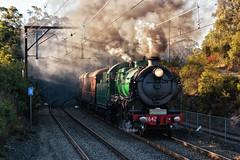 Ascent (SJB Rail) Tags: 3642 steam trains cowan railways thnsw rtm railroads sunset