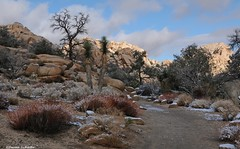 On the trail to Barker Dam (Photosuze) Tags: joshuatree landscape tees rocks boulders path snow winter california desert joshua tree national park trail clouds sky cactus