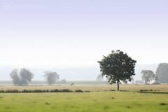 thursday morning walk -p4d- 019 (photos4dreams) Tags: thursdaymorningwalkp4d feld wald wiese wiesen forest tree trees sky wood woods branch zweig baum nature natur photos4dreams p4d photos4dreamz walk spaziergang