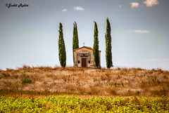 La Toscana (judit.rubio) Tags: nikond3000 nikor1855 nikon italia italy toscana tuscany campo field hermita smallchurch cipreses cypresses colores colours brillo dorado brightness golden