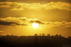 Hallelujah.... (Joe Hengel) Tags: socal southerncalifornia sunset sanjuancapistrano theoc trees silhouette silhouettes orangecounty oc outdoor orange california clouds ca goldenstate goldenhour golden glow evening eveninglight eveningskies watchingthesunset