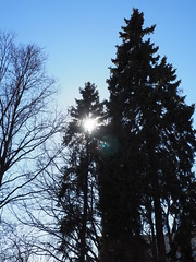 P4170061 (Helgi Hvitabjorn) Tags: helgihvitabjorn olympus sky plants