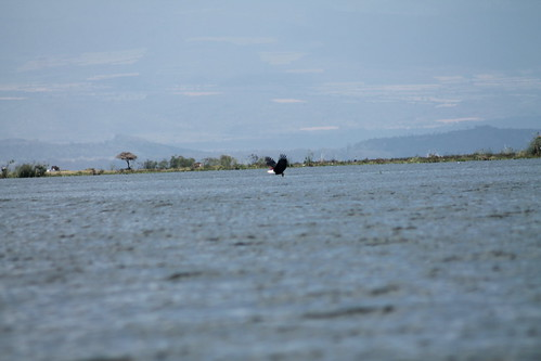Lake Naivasha - 16 Aug 2016 - 5