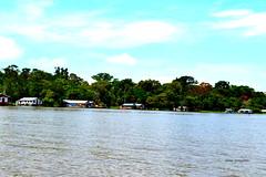 a12 (reginatnia) Tags: natureza photography manaus hoteltropical ribeirinhos rionegro riosolimoes portos pordosol aventura amazonas paisagens teatros