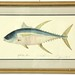 131. Artist Signed Proof of a Yellowfin Tuna