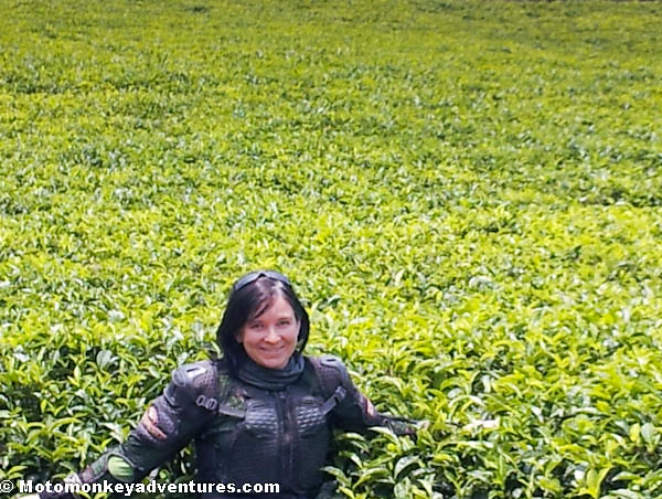 Danielle Standing In A Tea Plantation