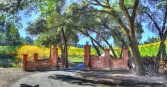 Week 45: Castello di Amorosa (Calistoga, CA) (jbone66 (Jay B)) Tags: castle canon vines wine calistoga winery vineyards napa 2012 week45 highway29 castellodiamorosa week45theme 522012 52weeksthe2012edition weekofnovember4