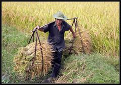 CAMINO A HALONG BAY (ITURRATE) Tags: babe tay hanoi ra sapa hmong halongbay bacha hmongflower