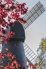 Autumn colour at WIndmill Gardens. (Owen Llewellyn) Tags: red urban colour london heritage fall mill leaves yellow industrial autum owen llewellyn southlondon brixton agricultural milfordhaven sw2 ashby spab blenheimgardens brixtonwindmill hlf hakin brixtonhill heritagelotteryfund grade2listed welshphotographer fowg ashbymill ashbysmill paulselwood restoredwindmill friendsofwindmillgardens owenllewellyn taffytubby owenllewellynimaging owlsworth ijpowlsworth millssection millsection cygnusimaging