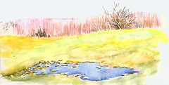Pasture Puddle (Artist Naturalist-Mike Sherman) Tags: november art rural landscape michigan farm transparent onlocation notphotography midwestern watercolorpainting pleinaire midmichigan danielsmithwatercolors