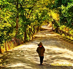 The Young Prince (NESIHO) Tags: autumn walnut son prince kurd walkingalone sonbahar payiz axkis hekar