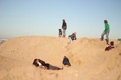 (malidinapoli) Tags: november sea holland strand licht meer scheveningen denhaag northsea sonne nordsee 2012 zuidholland nordzee herbstlicht