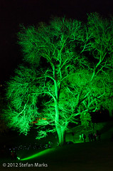 Tree and Light (Kathrin & Stefan) Tags: light newzealand plant tree art festival night outdoor auckland artinthedark