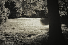 The glade (IR) (cablefreak) Tags: