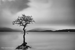 Lone Tree on Loch Lomond (~ Phil ~) Tags: white black tree mono bay scotland moody britain united great lone loch lomond isolated millarochy kindgom flickraward flickraward5 flickrawardgallery