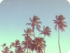 Descansar, coco, tropicais, praia... (Eline Cristine) Tags: blue naturaleza verde green praia nature brasil photography flickr cu days coco descansar 365 pe nacional pernambuco 2012 tropicais