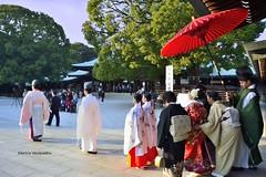 Shinto wedding, Meiji Shrine (Electra K. Vasileiadou) Tags: wedding sunset japan umbrella tokyo nikon shrine asia religion shibuya harajuku   kimono priest yoyogi  shinto asya  meijishrine       dugun japonya       d3100  gettyimagesjapan12q4