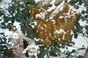 #324 ([ iany trisuzzi ]) Tags: brazil streetart tree film brasil analog 35mm lomo lomography doubleexposure multipleexposure sp ruaaugusta project365 365days saupaulo lasardina